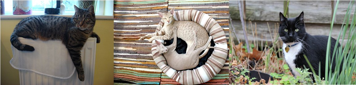 cat sitting is one of the pet services offered