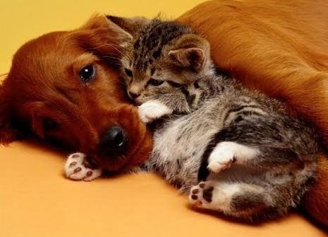 CDPOM loves animals