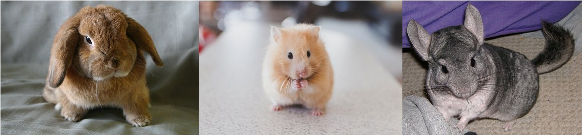 small furry animals pet care are among the pet services