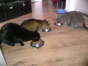 Cat sitting London Indy Nala & Tofu
