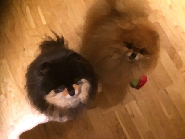 Pomeranianspainting