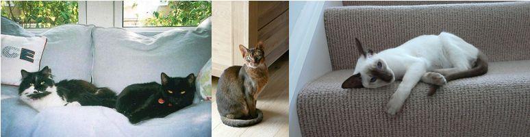 cat sitting London