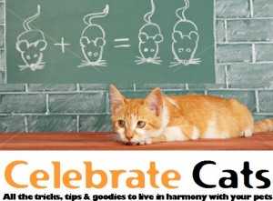 Celebrate Cats pet care