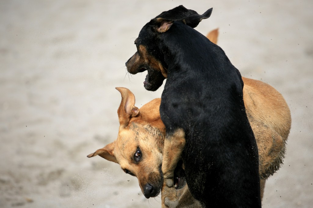 dog aggression in action