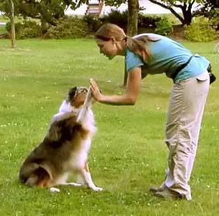 Dog Training pet care for Busy Dog Lovers