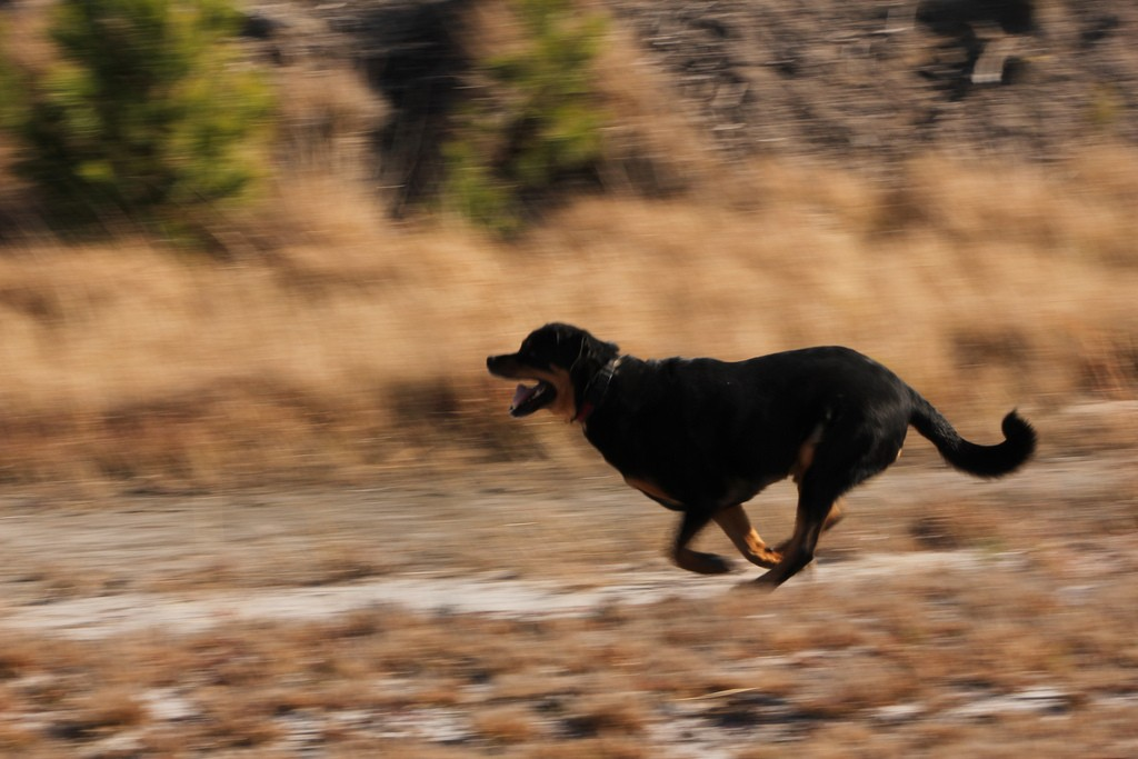 Dog chasing needs to be curbed