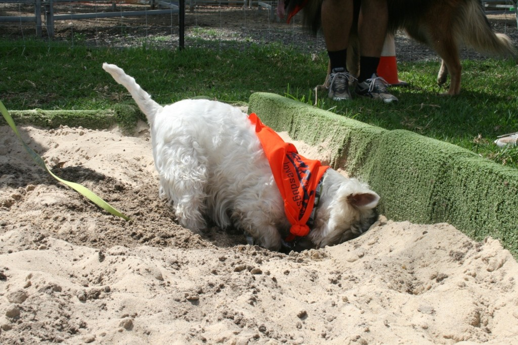 dog digging can be more than one can bear