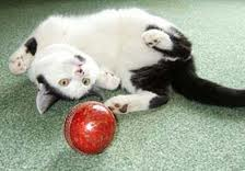 Cat toys pet care