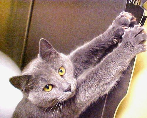 cat_scratching_furniture