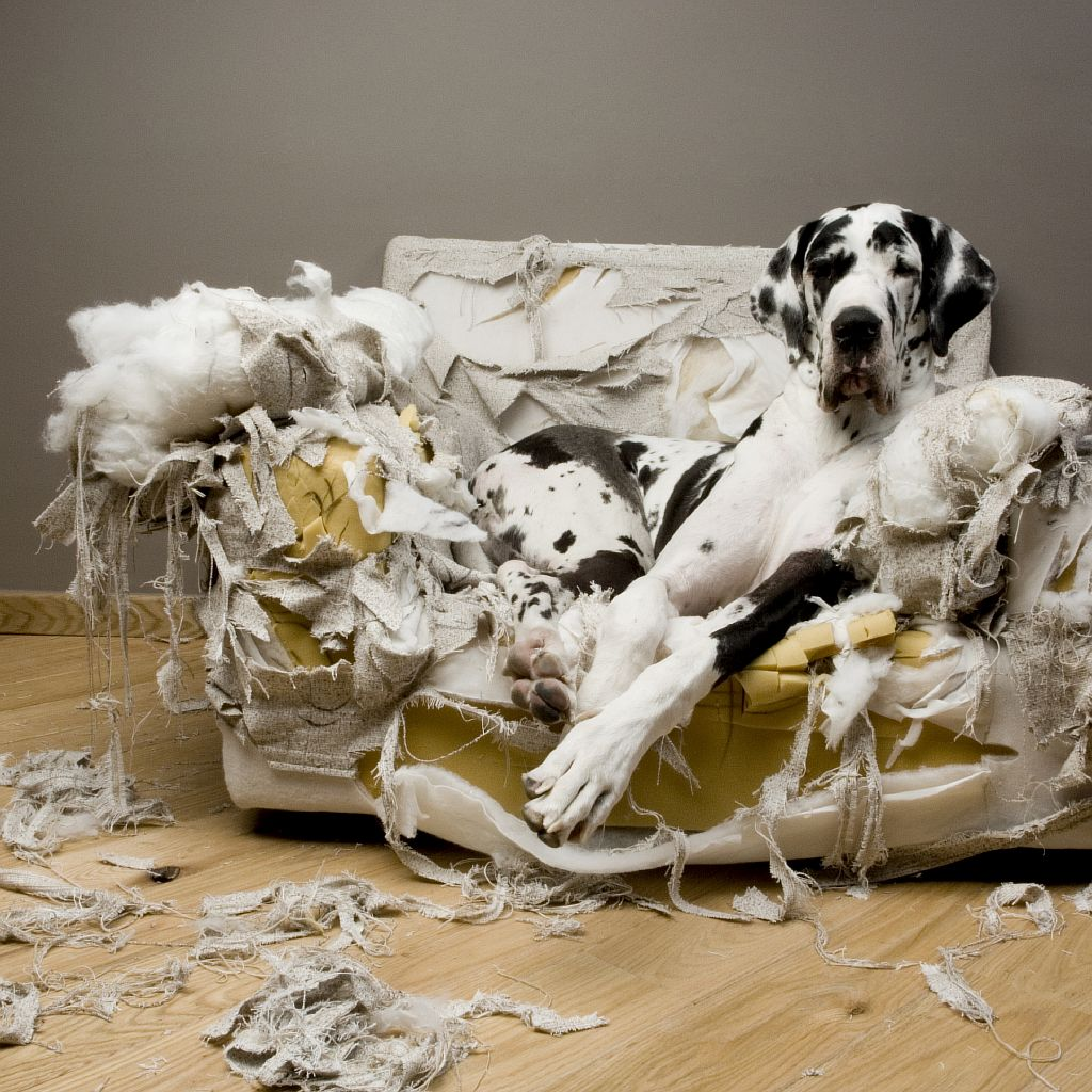 That's torn it: dog separation anxiety can reveal itself with destruction