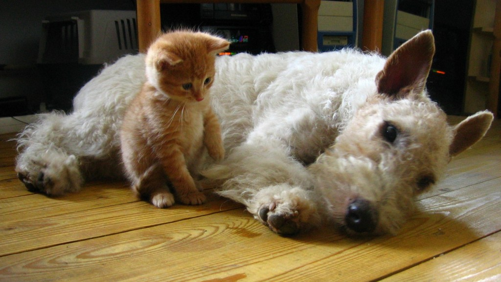 Dog training and cat training need to start as early as possible