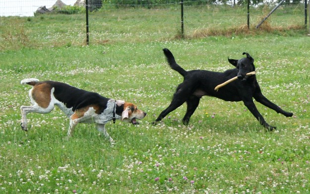 Glucosamine is esential to help dogs with joint problems