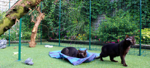 Run around: to keep your cat safe and secure you can always use a garden enclosure