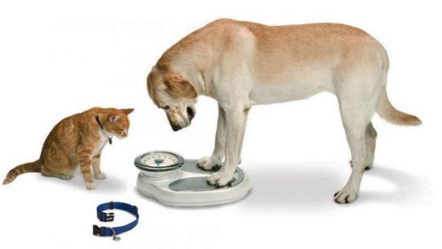 DogStandingOnScale