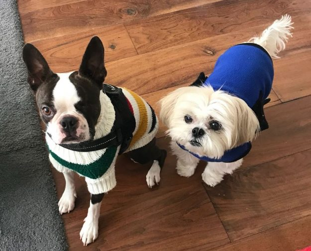 warm dog coats