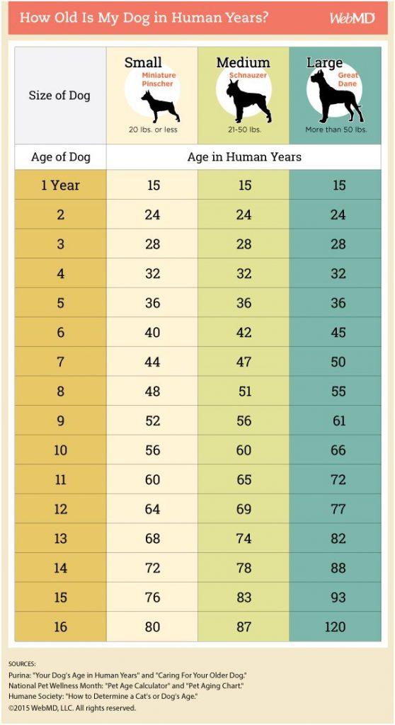 Dog age chart