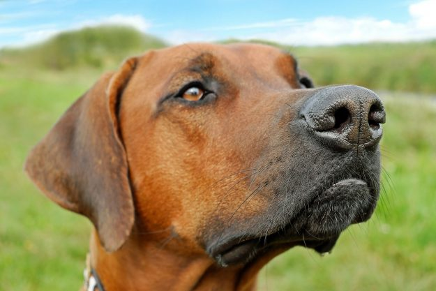 why dogs sniff