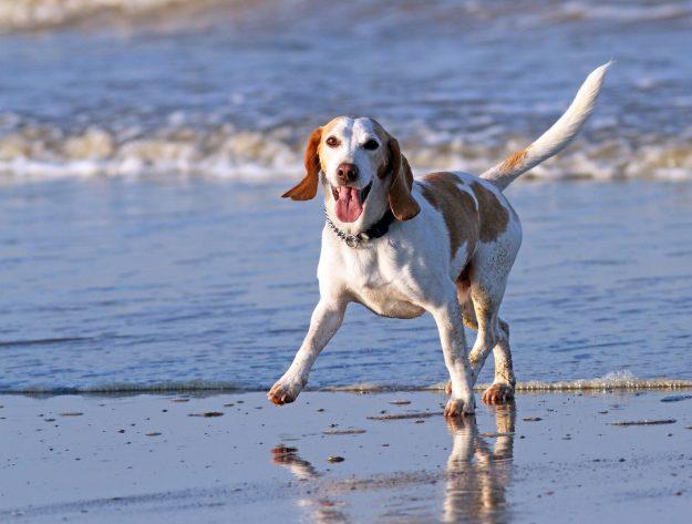 dog sense of humour