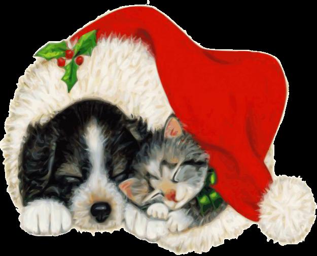 Pets at Christmas