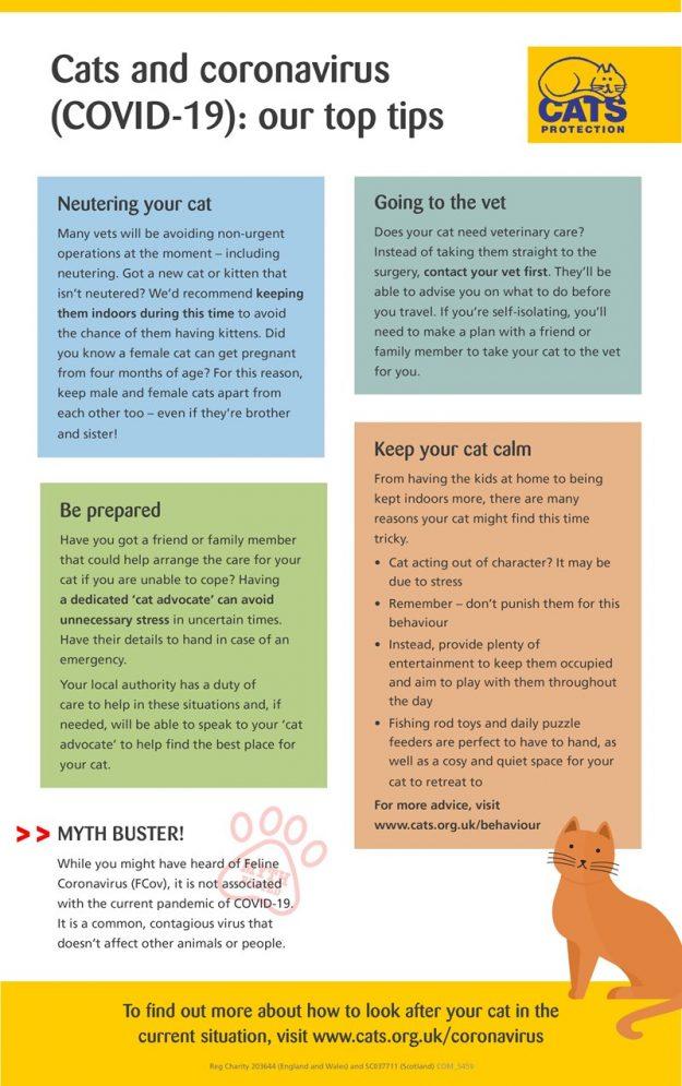 cats-and-coronavirus-visual-guide